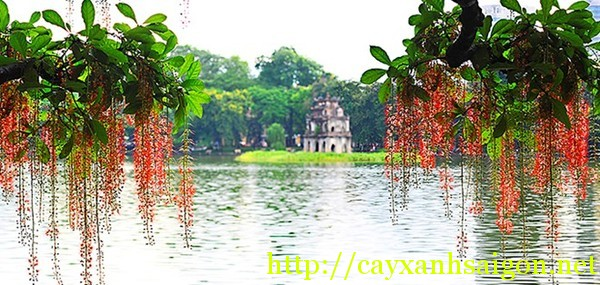 Lộc Vừng Hồ Gươm